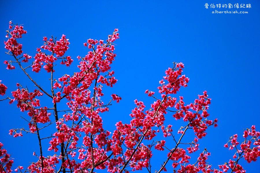 桃園龜山.壽山巖櫻花園