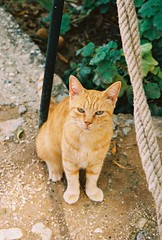 The Young Sicilian (Nastasiya-k) Tags: light summer italy film cat sicily sicilia scopello canoneos300v tonnaradiscopello cn200pro