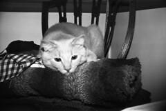 escher_on_blankets (Judy M. Boyle) Tags: hanover caffenol helioflex3000t benzgant hanoverpa caffenolc kentmere400 fppedu400