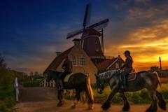 belgian horses in front of the Woodmill In Ijlst the Netherlands (fuji_john..Busy with HDR...) Tags: blue sky horses sun mill windmill zonsondergang rat belgian avond molen paard paarden ijlst amazone