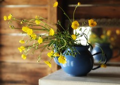 what's up buttercup? (s@ssyl@ssy) Tags: life blue stilllife reflection love still shed teapot tabletop buttercups likeasaunainhere ilovemyshed