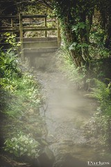 Mist on the water (craigparkes09) Tags: wood uk bridge trees wild england plants brown mist flower green nature wet water fog woodland river woods cornwall cloudy sony spooky erie morningmist a6000 sonya6000