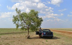 A Little Shade (shaneblackfnq) Tags: nt australia ute shade outback plains northern arid holden territory barkly blacksoil tableland shaneblack