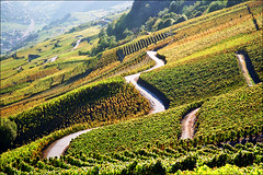 Vineyard plantations (Katarina 2353) Tags: mountain alps film landscape switzerland vineyard nikon europe sion katarinastefanovic katarina2353