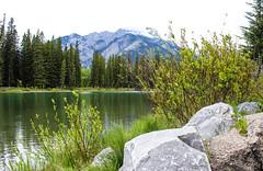 Banff Centre (myphotothrowaway) Tags: mountain lake mountains hiking lakes glacier louise alberta rivers backcountry banff canmore