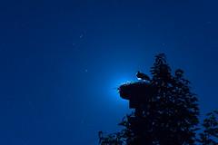 The moon behind ... (acbrennecke) Tags: achimbrennecke stork grieving blue stars nightshot trauer storch nikon5500 nikon