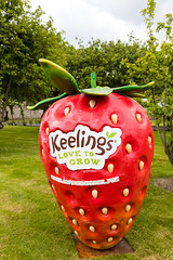 cricket_2015-43.jpg (Fingal County Council) Tags: fingal newbridgehouse flavours donabate pwp flavoursoffingal fingalcoco fingalcountycouncil