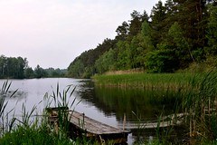 Am See / at the lake (r.stopable1) Tags: lohe eschede lowersaxony niedersachsen natur nature landscape landschaft seenlandschaft cellerland sdheide