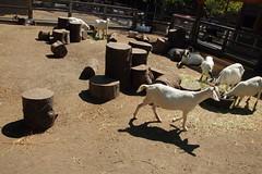 IMG_3630 (neatnessdotcom) Tags: new york city canon eos rebel zoo bronx ii di tamron vc 2016 550d f3563 t2i pzd 18270mm