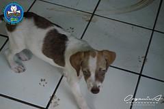 DSC08172 (OrgNicAmb) Tags: dogs perros nicaragua refugio mascotas masaya peluditos recataditos casahogarlucito orgnicamb