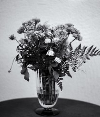 Still Life 1 (micke_wall) Tags: life flowers white black mamiya nature analog still bokeh mamiyarb67 natuer