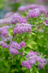 Spring Garden (JMS2) Tags: pink flowers plants green nature garden blossom outdoor sony florals