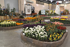 2016-03-11_0189n_amand (lblanchard) Tags: amand displaygarden 2016flowershow