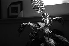 Plant (JVLam2012) Tags: life monochrome blackwhite still nikon sigma 50mmf28 d80