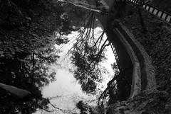 the forest in the water (troutfactory) Tags: trees blackandwhite bw reflection film monochrome japan forest river rangefinder  osaka analogue kansai ilforddelta400    minoh  50mmnokton minoo    voigtlanderbessat