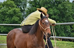 49 (CrevanNight) Tags: spring horse horses farm farms country equine train training thoroughbred thoroughbreds yearling yearlings cute pretty couple sweet equines new experience life lover stubborn young amish lancaster pennsylvania pa