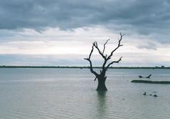 (d'ombra e di luce) Tags: blue film 35mm myanmar minoltasrt101
