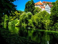 Green morning cycling along the river (eckiblues) Tags: green neckar tbingen