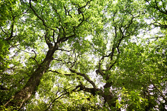 somewhere in forest (didier ribes) Tags: trees tree nature forest sony foliage ciel 100 foret arbre perdu verdure rx