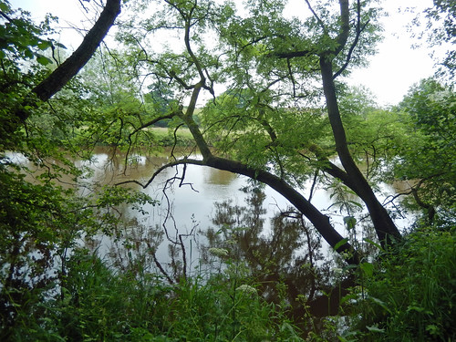 River Dee, 2016 Jun 16 -- photo 2