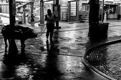 Market after dark-1003672 (Gene Trent) Tags: night pig market pikeplacemarket cleaner