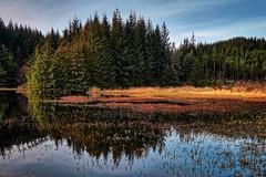Storavatnet, Norway (Vest der ute) Tags: trees water norway reflections landscape rogaland waterscape fav25 g7x ryksund