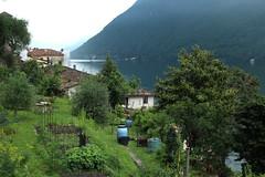Gandria (bulbocode909) Tags: tessin suisse maisons vert villages arbres lacs printemps jardins gandria