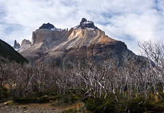 Los Cuernos del Paine (courtney_meier (away)) Tags: chile patagonia mountains backpacking andes torresdelpaine forestfire deadtrees andesmountains loscuernos loscuernosdelpaine mountainlight patagonianbeech