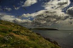 Sandycove Island (PWD. Photography) Tags: cork kinsale ireland island green blue grass sea sky clouds seagulls birds nature wild wildlife