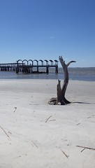 The Main Attraction, Jekyll Island, GA - IMGP4628 (catchesthelight) Tags: driftwoodbeach georgiasmostcompellingbeaches jekyllislandga barrierisland oneofthemostinterestingshorelines whitesand oaktrees driftwood gnarly naturalgraveyard preservation beauty
