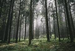 Forest Magic (desomnis) Tags: forest woodland wood woods landscapephotography landscape landschaft landscapes bohemianforest bhmerwald natur nature fog foggy desomnis canoneos6d sigma35mm sigma35mmf14dghsmart 35mm mhlviertel sterreich austria upperaustria obersterreich mist misty haze nebel