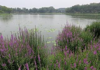 Yuanming Yuan Lake (Haidian District, China)