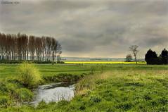 Trait d'union (JL) Tags: nuage ru marais arbre champ herbe pr colza gunes