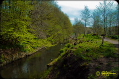 River Bank (mikesteph0) Tags: tree nature wet water scenery outdoor foliage flowersplants lr4