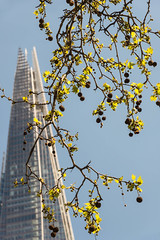 Spring in the City (tonybill) Tags: city tree green london leaves sunshine londonbridge may buds shard southwark nikon24120mm nikond600