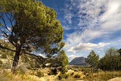 IMG_9888 Landscape(mountain Puig Campana) - Seen On Explore - 2013-05-13 # 34 (jaro-es) Tags: españa tree nature canon arbol day natur natura explore baum naturesfinest naturewatcher eos450 naturemaster pwpartlycloudy