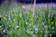 A cold morning in Ireland.. (mac d-ski photography) Tags: morning flowers ireland cold macro green art na