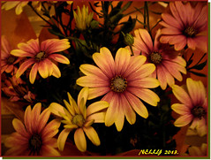 *Happy Birthday Nelly!* (MONKEY50) Tags: flowers plants plant flower color colour macro art colors yellow digital petals spring colours purple petal daisy mauve paintshoppro soe natures autofocus flickraward awesomeblossoms pentaxart mygearandme ringexcellence photographyforrecreation musictomyeyeslevel1 pentaxflickraward vigilantphotographersunite