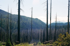 (andybokanev) Tags: film oregon forest 35mm fire highway northwest bend 20 canonat1 ektar100