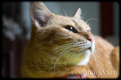 Whiskers! (Edson Magoolin Claudio) Tags: cat whiskers gato felino meow magoolin