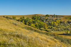 Painted Canyon Fall Leaves (Chris Le Texier) Tags: trees summer green canon landscape day clear northdakota autumntrees paintedcanyon 18135mm 60d