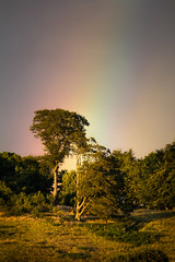 one end of a spectral phenomenon (Ray Byrne) Tags: trees rainbow alnwick northumberland endoftherainbow denwick raybyrne byrneoutcouk