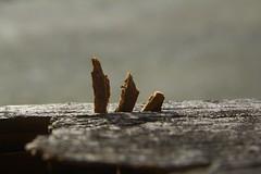 Die Flucht nach Ägypten (raumoberbayern) Tags: sun mountains alps fall face person tirol religion herbst egypt alpen sonne ägypten tyrol alpbach facialimpression flucht robbbilder sacredfamily heiligefamilie
