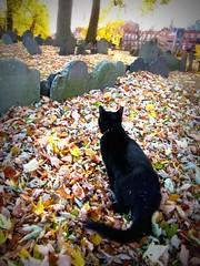 (Star Cat) Tags: autumn vacation fall cemetery grave graveyard boston stone cat blackcat massachusetts tomb tombstone kitty prince northend coppshillburyingground tombston coppshillburialground