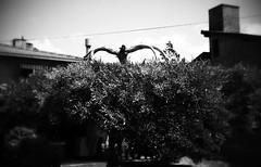 tenebroso!!!! (arq_amei) Tags: blancoynegro arbol negro tenebroso flickrandroidapp:filter=none