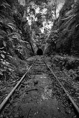 Road to Perdition (evangelique) Tags: abandoned wet train dark flora rainforest tracks surreal rail tunnel spooky nsw vegetation greenery helensburgh dense undergrowth {vision}:{outdoor}=0946 {vision}:{mountain}=0625 {vision}:{plant}=0541 {vision}:{sky}=07