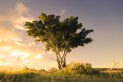 Lonely Tree in Addoland