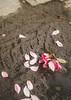 Płatki (Konrad Krajewski) Tags: flower nature płatki