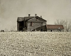 Up To the Big House with Cut Cotton Stalks:  Warren County, North Carolina (EdgecombePlanter) Tags: painterly abandoned mystery d