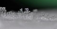 Macro ice (Delena Jane) Tags: canada macro ice closeup newfoundland frost crystal ngc conceptionbaysouth pentaxart delenajane